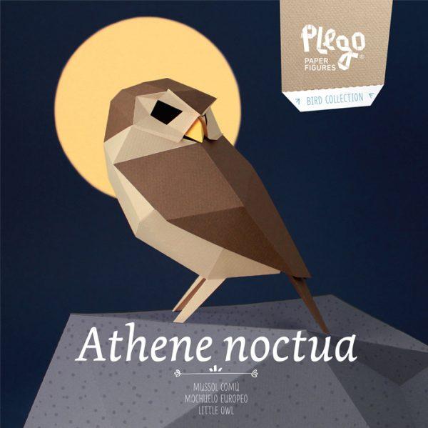 athene noctua little owl mochuelo mussol
