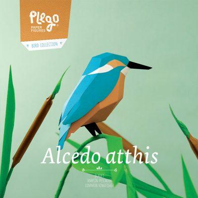 alcedo atthis kingfisher blauet martin pescador