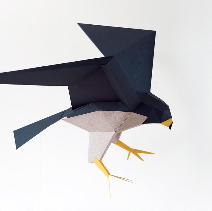 falco peregrinus peregrine falcon